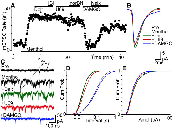 Presynaptic μ-opioid inhibition predominates during menthol enhanced glutamatergic transmission . (a) Time plot of miniature EPSC (mEPSC) rate during superfusion of menthol (400 μM), then during addition of deltorphin-II (Delt, 300 nM), ICI-174864 (ICI, 1 μM), U69593 (U69, 300 nM), nor-BNI (300 nM), DAMGO (3 μM) and naloxone (Nalx, 1 μM). (b) Averaged traces and (c) raw current traces of mEPSCs prior to (Pre), and during menthol, then during addition of deltorphin-II, U69593 and DAMGO. Inset in (c) is an expanded part of the trace to show summation of mEPSCs in the presence of menthol. Cumulative probability distribution plots of mEPSC (d) inter-event interval and (e) amplitude for the epochs averaged in (b) (number of events = 648, 1597, 1540, 1259, 506 for control, menthol, deltorphin-II, U69593 and DAMGO over 80, 40, 40, 40 and 80 s intervals, respectively). (a) - (e) are taken from one neuron.