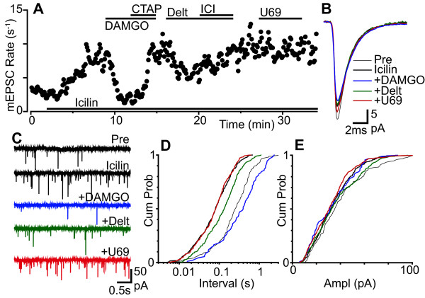 Both μ- and δ-opioids inhibit icilin enhanced glutamatergic transmission . (a) Time plot of miniature EPSC (mEPSC) rate during superfusion of icilin (100 μM), then during addition of DAMGO (3 μM), CTAP (1 μM), deltorphin-II (Delt, 300 nM), ICI-174864 (ICI, 1 μM) and U69593 (U69, 300 nM). (b) Averaged traces and (c) raw current traces of mEPSCs prior to (Pre), and during icilin, then during addition of deltorphin-II, U69593 and DAMGO. Cumulative probability distribution plots of mEPSC (d) inter-event interval and (e) amplitude for the epochs averaged in (b) (number of events = 155, 372, 91, 343, 438 for control, icilin, DAMGO, deltorphin-II and U69593 over 60, 44, 52, 64 and 48 s intervals, respectively). (a) - (e) are taken from one neuron.