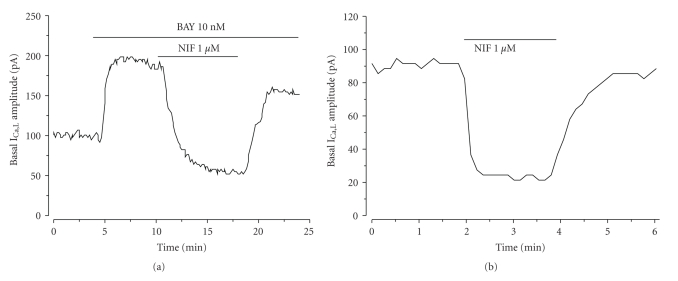 Effect of nifedipine and BAY on I Ca,L amplitude in A7r5 cells. Original records of I Ca,L measured in Patch-clamp experiments showing that: BAY (10 nM) stimulates I Ca,L and nifedipine (NIF; 1 μ M) inhibits the BAY stimulation (a); Nifedipine(1 μ M) directly inhibits the basal I Ca,L (b).