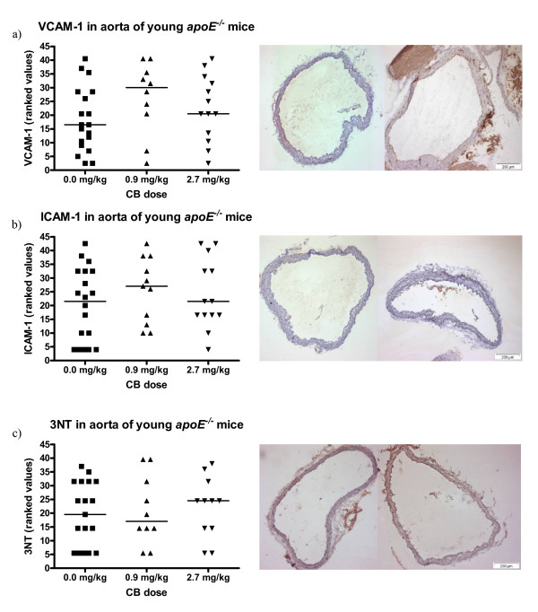 Expression of VCAM-1 and ICAM-1 on the endothelium and the presence of 3-nitrotyrosine (3NT) in the vascular tissue of aorta from 11-13 weeks old apoE -/- mice exposed to carbon black by i.t. instillation . The antibodies used were HRP-streptavidin conjugated and visualized with DAB. On the left, the data are depicted as geometric means of ranked values representing the amount of staining assessed in 4 sections of aorta from each animal. The medians are depicted as horizontal lines (n = 10-20); each symbol represent the result from one animal. On the right, images are shown of aorta sections representative of the median in the control group (left) and the 2.7 mg/kg exposed group (right). Binding of antibodies can be seen as brown staining of the tissue.