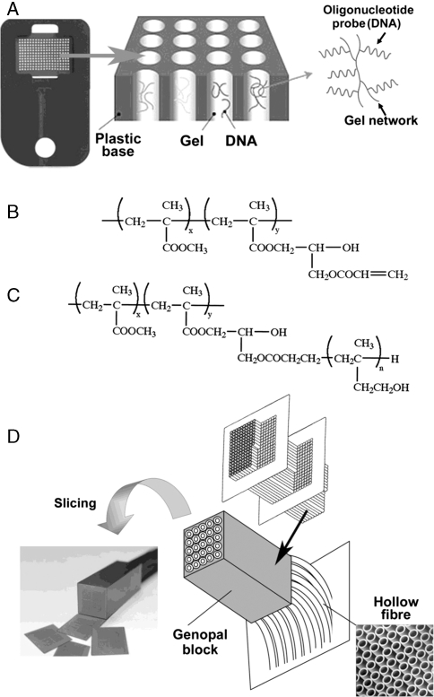 Structure of Genopal™ and its mass production application via slicing of the Genopal™ block. (A) Schematic representation of the Genopal™ microarray, which is composed of plastic hollow fibres. Oligonucleotide DNA capture probes were attached to a hydrophilic gel within the three-dimensional space of each hollow fibre. (B) The chemical structure of the comb polymers containing polymer-forming functional groups on their side chains. These polymers were inserted into the hollow fibres. (C) Comb polymers with poly HEMA added to their side chains firmly adhered to the inner walls of the hollow fibres. (D) Schematic representation of a Genopal™ block: the hollow fibres were bundled in an orderly arrangement, hardened with resin to form a Genopal™ block and sliced into thin microarrays.