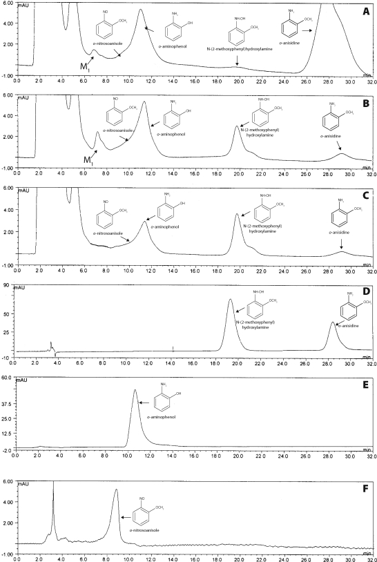 HPLC elution profiles of metabolites of 1 mM o -anisidine incubated with rabbit microsomes ( A ), of 1.0 mM N -(2-methoxyphenyl)hydroxylamine incubated with rabbit ( B ) and rat ( C ) hepatic microsomes. ( D ) synthetic N -(2-methoxyphenyl)hydroxylamine and o -anisidine. ( E ) o -aminophenol. ( F ) o -nitrosoanisole. For incubation conditions see Materials and methods . Peaks eluting between 2.0 and 5.5 min, solvent front, NADPH and protein components of microsomes and NADPH-generation system.
