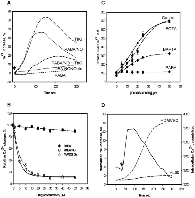 <t>PABA/NO</t> treatment of HL60 cells results in temporal and dose-dependent increases in intracellular Ca 2+ . A) Time-dependent increases were assessed following treatment with 20 nM ThG; 25 µM PABA/NO; 25 µM PABA; 20 nM ThG after pretreatment with PABA/NO (15 µM, 30 min); 25 µM DEA NONOate B) Competitive inhibition of ThG (100 nM) - mediated increases in intracellular Ca 2+ by PABA/NO, purified homogeneous nitro-aromatic product (MW 622 Da), or PABA. C) Dose-dependent increases in Ca 2+ following PABA/NO (Control) or PABA were measured; in the presence of the intracellular Ca 2+ chelator BAPTA-AM (5 µM); or in the presence of the extracellular Ca 2+ chelator, <t>EGTA</t> (5 mM, long dashedline). The fluorescence measurements were recalculated as actual intracellular Ca 2+ concentrations (see Materials and Methods ). D) Kinetics of intracellular NO (left Y-axis) and Ca 2+ (right Y-axis, solid line) generation after PABA/NO (15 µM) addition. Data are the average representative traces (A and D) or mean ± SE (B, C) for 3 independent experiments.