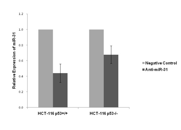 Suppression of miR-31 expression by anti-miR-31 as detected by TaqMan real-time PCR . Compared with negative control, miR-31 was reduced to 44.1% in HCT-116 p53+/+ ( p = 0.042) and 67.8% in HCT-116 p53-/- ( p = 0.046) cell line.