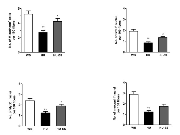 Quantification of satellite cells labeled positive in soleus muscles . Number of M-cadherin + cells or BrdU + , myoD + , and myogenin + nuclei per 100 fibers in cross sections of the soleus muscles. ** P