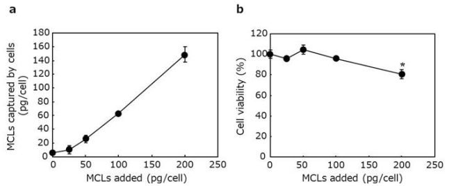 MCL-labeling of cardiomyocytes. ( a ) Measurement of MCL amount captured by the cells. Isolated cardiomyocytes were suspended in the medium containing various MCL concentrations (0, 25, 50, 100 and 200 pg/cell), and incubated for 1 h at 4 °C. Subsequently, the magnetite amount captured by the cells was measured using the potassium thiocyanate method. ( b ) The effect of MCL-labeling on cell viability. Cardiomyocytes with or without MCL-labeling were seeded into wells of a 96-well plate. After 4-day culture, cell viability was measured using the WST-8 assay. Data are expressed as mean ± SD (n = 3). * P