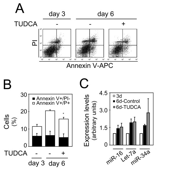 Inhibition of apoptosis by TUDCA was not associated with a decrease in proapoptotic miRNAs expression . Mouse NS cells with 3 days of differentiation were either untreated or treated with 50 μM of TUDCA for 72 hours. Collected cells were stained with Annexin-V-APC/PI to evaluate cell death, or processed for total RNA extraction and miRNAs expression evaluation by quantitative Real Time-PCR. A) Representative Annexin V-APC/PI stainings showing decreased cell death after TUDCA incubation. B) Quantitation of either dying (Annexin+/PI-) or dead (Annexin+/PI+) cells depicted in FACS diagrams. Results are mean ± SEM of triplicates. C) Expression of proapoptotic miRNAs at 3 and 6 days, with or without TUDCA treatment. miR-16, let-7a and miR-34a expression were evaluated from 10 ng of total RNA, using specific primers for each miRNA, and GAPDH for normalization. Expression levels were calculated by the ΔΔ C t method using differentiated cells at 3 days as calibrator. Data represent mean ± SEM of three independent experiments. * p