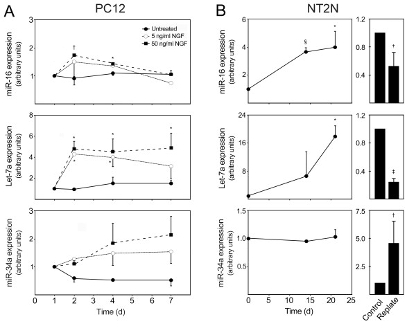 Differentiation of PC12 and NT2N cells were associated with modulated levels of miR-16, let-7a and miR-34a expression . PC12 cells were differentiated upon NGF treatment at 1 day with either 5 or 50 ng/ml. NGF-untreated cells were also prepared. Cells were collected at 1, 2 4 and 7 days. NT2N cells were induced to differentiate with 10 μM all-trans retinoic acid and collected at 0, 14 and 21 days. In parallel experiments, cells were replated at 14 days in Matrigel, deprived of retinoic acid and incubated with mitotic inhibitors and further cultured for 7 days. Control cells were maintained in initial retinoic acid treatment. Both PC12 and NT2N-collected cells were processed for total RNA extraction and evaluation of miRNAs expression levels using quantitative Real Time-PCR. A and B) miR-16, let-7a and miR-34a expression during PC12 and NT2N differentiation, respectively. miRNAs expression were evaluated from 10 ng of total RNA, using specific primers for each miRNA. GAPDH and RNU6B were used for normalization in PC12 and NT2N cells, respectively. Expression levels were calculated by the ΔΔ C t method. NGF-untreated cells at 1 day was used as calibrator in PC12 cells, while undifferentiated (day 0) or unreplated cells were used as calibrator in NT2N cells. Data represent mean ± SEM of three independent experiments. A) * p