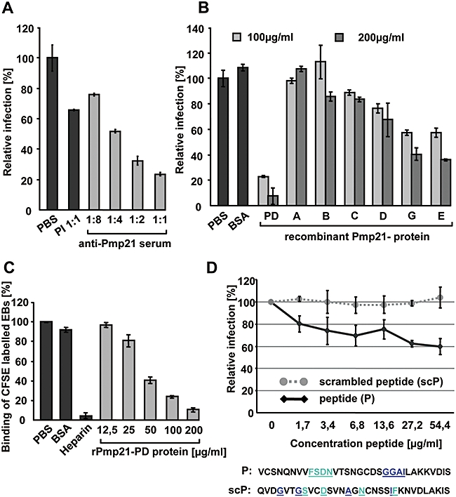 Recombinant Pmp21 inhibits infection by C. pneumoniae . Infection of HEp-2 cells by C. pneumoniae is inhibited by prior addition of anti-Pmp21, recombinant Pmp21 or a synthetic peptide derived from Pmp21.A. Purified EBs were incubated with PBS, pre-immune serum (diluted 1:1 with PBS) or serially diluted anti-Pmp21-E before being used for infection of HEp-2 cells. The number of inclusions formed was determined by microscopy 48 h p.i. The data in (A), (B) and (D) are derived from four independent experiments for each condition, each involving observation of 20 microscope fields.B. HEp-2 cells (1 × 10 6 ) were incubated with PBS, 200 µg ml −1 BSA, or 100 µg ml −1 or 200 µg ml −1 recombinant Pmp21-PD or one of the other Pmp21 variants as indicated prior to incubation with purified C. pneumoniae EBs. Cells were fixed 48 h p.i. and the number of inclusions determined as explained above. PBS control = 100%.C. Adhesion of viable, CFSE-stained C. pneumoniae EBs to human HEp-2 cells was detected by flow cytometry. Attachment of EBs in the presence of PBS or 200 µg ml −1 BSA served as the control, and the fluorescence intensity associated with HEp-2 cells pre-incubated in PBS was set to 100%. Binding of EBs in the presence of 500 U ml −1 heparin or increasing amounts of recombinant Pmp21-PD were analysed accordingly. n = 2 wells; number of experiments = 6. Error bars indicate standard deviations.D. A Pmp21-derived peptide attenuates C. pneumoniae infection. Prior to incubation with purified C. pneumoniae EBs, HEp-2 cells (1 × 10 6 ) were incubated without or with increasing amounts (1.7–54.4 µg ml −1 ) of a 32-amino-acid peptide derived from Pmp21 (residues 745–776) (peptide) or a scrambled version of the sequence with the same amino acid composition (scrambled peptide). Cells were fixed 48 h p.i. and the number of inclusions determined by microscopy as detailed above. PBS control = 100%.