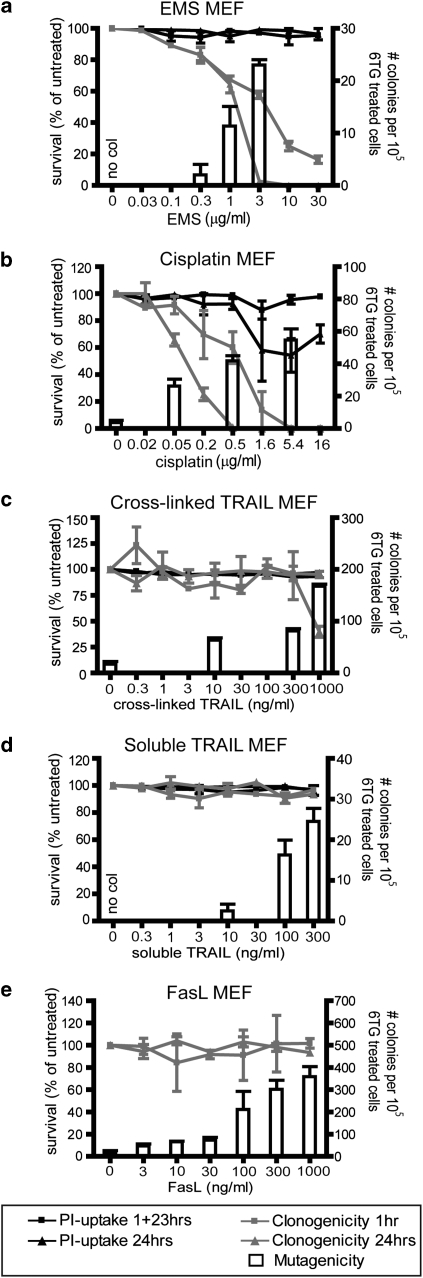 TRAIL or FasL treatment of mouse embryo fibroblast (MEF) cells provokes generation of 6-TG-resistant colonies. MEF cells were incubated with various doses of ethane methyl sulphonate ( a ), cisplatin ( b ), cross-linked TRAIL ( c ), soluble TRAIL ( d ) or Fas ligand ( e ), for 1hr or 24 h, prior to propidium iodide uptake ( a – d ) or clonogenicity assays ( a – e ). Cells were exposed to selected doses of the drugs for 1 h for HPRT mutagenicity assays. The left Y-axis and black and gray lines depict survival as measured in acute cell death and clonogenicity assays. The right Y-axis and white columns show the number of 6-TG-resistant colonies in mutational assays. Doses, which failed to generate any 6-TG-resistant colonies are labeled 'no col'. Error bars indicate standard errors of the means from either three ( a , b , e ), four ( c ) or five ( d ) independent experiments.