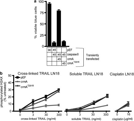 CrmA expression prevents TRAIL-induced DNA damage in LN18 cells. ( a ) LN18 cells were transiently transfected with the indicated plasmids (90% of transfected DNA), along with a β-galactosidase expression plasmid (10%). The transfectants were stained with Xgal and the blue (transfected) cells were scored visually for apoptosis based on morphological criteria. The percentage of the transiently transfected plasmids are indicated under the graph. ( b ) LN18 cells were transiently transfected with an empty vector (pEF) or plasmids encoding wild-type or mutant crmA, then incubated with the indicated doses of cross-linked TRAIL, soluble TRAIL or cisplatin for 5 h. The proportions of cells bearing phosphorylated H2AX were quantitated by flow cytometry. Error bars indicate standard errors of the means from three independent experiments.