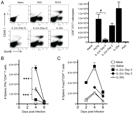 IL-2Jc-mediated protection is associated with impaired expansion of antigen-specific CD8 + T cells, reduced effector CD4 + T cell responses, and Treg cell expansion. A) C57BL/6 mice were adoptively transferred with 10,000 CD8 + CD45.1 + OTI T cells, and infected with SIINFEKL-expressing transgenic Pb TG. Control mice were infected with non-SIINFEKL-expressing Pb G parasites. Pb TG-infected mice were i.p. treated with IL-2Jc (day 0 or day 2), IL-2Sc (day 0), or control saline. On day 6 p.i., when control mice were displaying ECM symptoms, splenic CD8 + T cells (gated in FACS plots) were assessed for the presence of CD45.1 + SIINFEKL-specific T cells, and expression of the activation marker, GzmB. The graph indicates the number of CD45.1 + CD8 + SIINFEKL-specific T cells per spleen. Mann-Whitney * p
