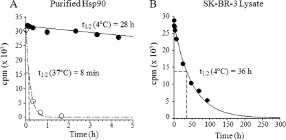 """Dissociation of [ 3 H]17-AAG from purified Hsp90 and SK-BR-3 lysates is highly temperature-dependent. Purified Hela Hsp90 (100 n m ) or lysate Hsp90·[ 3 H]17-AAG complexes were formed as described under """"Experimental Procedures"""" and passed over size exclusion spin columns. Column eluates were incubated with 10 μ m cold 17-AAG, and samples were removed at different time points. A loss of bound radioactive 17-AAG counts from Hsp90 was measured at both 4 and 37 °C ( A ) and Hsp90 in SK-BR-3 cancer cell lysate at 4 °C ( B ). The data were fit to a monoexponential decay equation."""