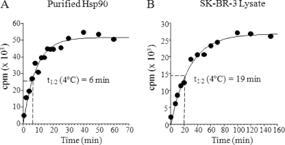 Binding of [ 3 H]17-AAG to purified Hela Hsp90 and SK-BR-3 lysates at 4 °C. The binding reaction was initiated by adding 10 μ m [ 3 H]17-AAG to 100 n m purified Hsp90 or to SK-BR-3 lysate containing ∼100 n m Hsp90. Drug association was measured at 4 °C by a time-dependent increase in protein bound counts for purified Hsp90 ( A ) or Hsp90 in SK-BR-3 cell lysate ( B ). Data were fitted by nonlinear regression to a single exponential equation to obtain a ( k obs ) value. Half-life was calculated using the equation t ½ = 0.693/ k obs .