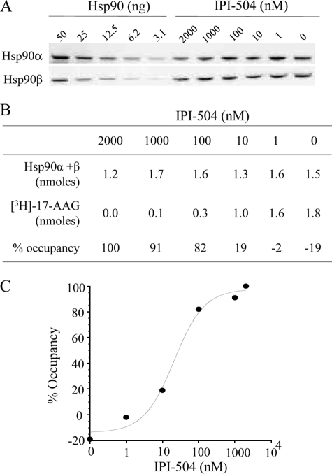 Determination of Hsp90 occupancy in living cells. H1650 cells were incubated with increasing concentrations of IPI-504 for 6 h at 37 °C. Total Hsp90 protein levels were determined by quantitative immunoblotting using separate anti Hsp90α and Hsp90β antibodies and recombinant proteins as internal standards ( A ). Percent Hsp90 occupancy was determined by titration of open binding sites at 4 °C and total Hsp90 ( B and C ). Data are from a representative experiment with n = 2.