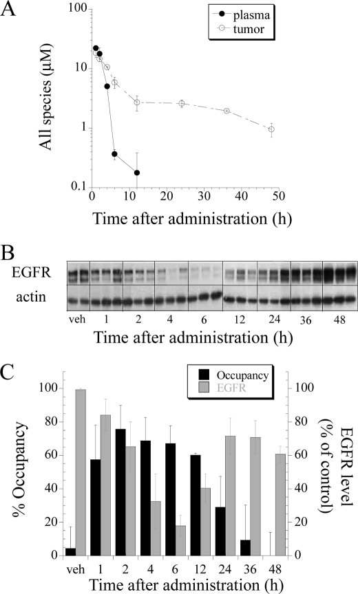 Hsp90 occupancy is a better predictor of in vivo pharmacodynamic effects by IPI-504 than tumor or plasma PK. H1650 tumor-bearing mice were treated with a single dose of 100 mg/kg intravenous IPI-504. Tumors and blood plasma were harvested at designated time points post dose. Drug levels of Hsp90 active species (IPI-504, 17-AAG, and 17-AG) were quantified by LC-MS/MS in plasma and in tumor ( A ). EGFR protein levels ( B ) and Hsp90 occupancy ( C ) were measured in tumor tissue. Data are expressed as averages ± S.D. (vehicle ( veh ), n = 2; and 1–48 h, n = 3).