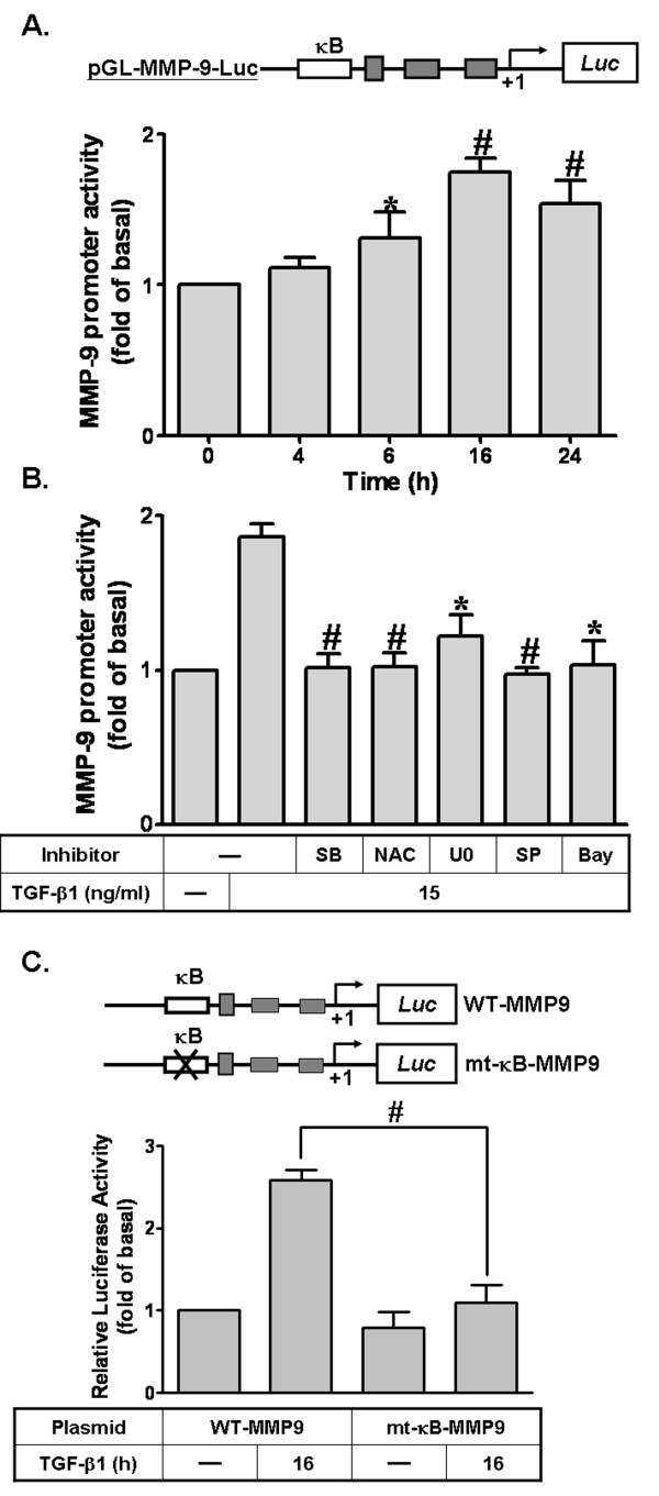 The ROS/MAPKs-dependent NF-κB cascade is required for TGF-β1-induced MMP-9 promoter activity . (A) Schematic representation of a 5'-promoter regions of the rat MMP-9 gene fused to the pGL-luciferase reporter gene (pGL-MMP-9-Luc). The translational start site (+1) of the luciferase reporter gene is indicated by an arrow. RBA-1 cells were transiently cotransfected with pGL-MMP9-Luc and pGal encoding for b-galactosidase. After transfection, cells were treated with TGF-β1 (15 ng/ml) for the indicated time intervals. (B) Cells were pretreated with SB431542 (SB43, 10 μM), NAC (100 μM), U0126 (10 μM), SP600125 (SP, 10 μM), or Bay11-7082 (Bay, 1 μM) for 1 h, and then incubated with TGF-β1 for 16 h. (C) Activation of wild-type (WT) and NF-κB-point-mutated (mt-κB) MMP-9 promoter constructs by TGF-β1. Schematic representation of the different MMP-9-luciferase constructs, either wild-type (WT) or modified by single-point mutation of the NF-κB binding site (upper panel). After overnight cotransfection and incubation with TGF-β1 for 16 h, promoter activities of different MMP-9-promoter constructs were measured as relative MMP-9 promoter activity to b-galactosidase. The relative increase in MMP-9 promoter activity induced by TGF-β1 normalized to that of un-stimulated cells is indicated as fold increase. Data are expressed as mean ± SEM of at least three independent experiments (n = 3). * P