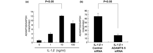 Effect of interleukin-1β (IL-1β) stimulation on ADAMTS5 mRNA expression in rabbit nucleus pulposus (NP) cells. After real-time polymerase chain reaction (PCR), the ADAMTS5 mRNA expression level after IL-1β stimulation (24 hours) in rabbit NP cells is shown (a) . IL-1β at 10 ng/ml induced the highest level of increased expression of mRNA for ADAMTS5 (about 12-fold); that concentration was chosen for subsequent studies. (b) NP cells seeded in a 12-well plate at a density of 1 × 10 5 cells/well. After the 48-hour preculture period, cells were cultured in serum-free media in the presence of IL-1β (10 ng/ml) for 24 hours. After the 24-hour treatment with IL-1β, NP cells were transiently transfected with the anti- ADAMTS5 oligonucleotide or control oligonucleotide by adding oligonucleotide directly to the culture media. Twenty-four hours later, NP cells were collected, and the expression of ADAMTS5 was analyzed with real-time PCR. ADAMTS5 mRNA expression was knocked down by about 70% in rabbit NP cells that were transfected with ADAMTS5 siRNA and stimulated with IL-1β (10 ng/ml). The results are reported normalized to GAPDH .
