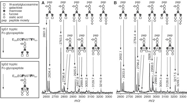 <t>MALDI-TOF-MS</t> analysis of tryptic glycopeptides of IgG1 and IgG2. A representative sample of an RA-patient before pregnancy (a) and in the third trimester (b) is shown. Glycopeptides derived from IgG1 and IgG2 were analyzed for galactosylation and sialylation in the reflectron positive mode. Glycopeptides of IgG 1 are indicated by continued arrows, while glycopeptides of IgG2 are indicated by striated arrows. Three glycoforms of IgG1 have been found to be below the detection limit of the MALDI-TOF-MS method in this sample as well as in several other samples.