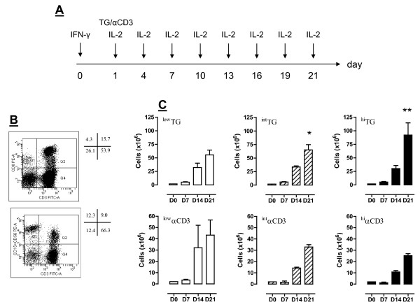 Experimental layout and expansion of PBMC in cultures supplemented with TG . Panel A : PBMC from consented healthy donors were initially exposed to IFN-γ (day 0), followed by different concentrations of either TG or αCD3 mAb (day +1) and <t>IL-2</t> every 3 days. Further details are provided in Materials and Methods. Panel B : The frequency of CD3 + CD8 + T cells, NK cells (CD3 - CD16 + CD56 + ) and CD3 + CD56 + T cells from a representative PBMC sample at baseline is shown. Quadrant markers were set according to the proper isotypic control (not shown). The percentage of cells staining positively for a given antigen is indicated. Panel C : Cells were harvested weekly and counted. The number of cells was significantly higher after challenging with TG either at 250 ( int TG; *p
