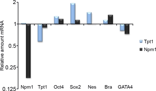 Tpt1 and Npm1 are involved in ES cell maintenance. Involvement of Tpt1 and Npm1 in ES cell maintenance was investigated using shRNA constructs against each gene and analyzed by qPCR 48 h post transfection. Downregulation of Tpt1 (blue bars) resulted in a minor increase in Oct4 and Brachyury (Bra) levels, a decrease in GATA4 levels, whereas levels of Sox2 and Nestin (Nes) increased significantly, indicative of involvement in ectodermal differentiation. Downregulation of Npm1 (black bars) resulted in minor increases in Oct4 and Sox2 levels, decreased GATA4 levels, while increased Brachyury (Bra) levels, indicative of involvement in mesodermal differentiation. All experiments were done in triplicates and normalized first to GAPDH (reference gene), and then to corresponding negative control shRNA constructs.
