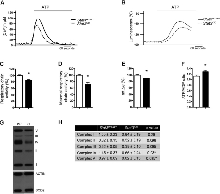 Decreased mitochondrial activity and enhanced <t>ATP/ADP</t> ratio of Stat3 C/C MEFs. ( A ) Mitochondrial Ca 2+ homeostasis. MEFs of the indicated genotypes were transduced with a mitochondria-targeted aequorin (AEQ), which was measured then upon challenging with 100 μM ATP as indicated. ( B ) ATP-induced changes in ATP concentration in mitochondria. MEFs were transiently transfected with a mitochondria-targeted luciferase 36 hours prior to ATP measurement, and data expressed as a percentage of the initial value. ( A,B ) Data are representative of at least 10 traces, each from 3 independent experiments. ( C ) Respiratory chain activity measured with resazurine. *, p