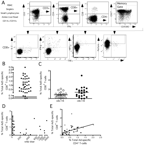 Baseline CD8 + T-cell responses. Forty total subjects with a range of Ad5 nAb titers were analyzed. Five seronegative (Ad5 nAb titer ≤18, gray symbols) and five seropositive subjects (Ad5 nAb titer > 18, black symbols and white boxes) received Merck Ad5 gag/pol/nef as described in Methods . Each circle represents a subject with lines representing the mean. CD8 + T-cell responses were measured by flow cytometry following whole Ad5 vector stimulation. A ) Gating strategy for measuring Ad5-specific T cells by intracellular cytokine staining. At least 100,000 PBMCs were collected on a modified LSR II. Singlets were selected with a FSC-A and FSC-H, followed by a lymphocytes gate, dead cell exclusion, and exclusion of contaminating CD14 + monocytes and CD19 + B-cells. CD3 + T-cells were selected and then CD8 + cells by CD8 + CD4 − . Central memory, effector memory and effector CD8 + T cells were selected before gating on each cytokine. Because cells can store perforin and these appear perforin + , Ad5-specific CD8 + perforin + T cells must also be positive for another function to be considered as a responding event. B ) Total Ad-specific CD8 + response. The total Ad-specific CD8 + response was computed by summing cells making at least IL-2, IFN-γ, MIP1α, or TNFα as measured by flow cytometry. C ) There was no difference in the magnitude of the Ad-specific CD8 + T-cell response between serogroups at baseline. D ) There was no correlation between the magnitude of Ad-specific CD8 + T-cell responses and nAb titer at baseline. E ) There is a correlation between the magnitude of Ad-specific CD4 + and Ad-specific CD8 + T-cell responses at baseline.