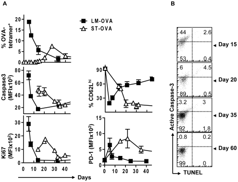 ST-OVA infection induces a lower and protracted increase in the expression of active caspase-3 consistent with delayed and muted antigen induced CD8 + T cell proliferation. B6129F1 mice that resist infection with ST were parked with 10 4 OT1 cells and challenged with either 10 3 LM-OVA or 10 3 ST-OVA iv and sacrificed at various time points after infection. Single cell suspensions were obtained from spleens and stained with various markers indicated in the figure. Relative expression of various markers on OVA-tetramer + CD8 + T cells was evaluated (A). Cells were also co-stained for DNA cleavage (TUNEL) vs. active caspase-3 expression (B). (n≥3 per timepoint).