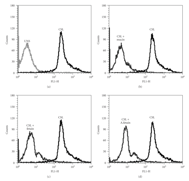Binding of CSL to human PBMCs and inhibition of binding with competing glycoconjugates. PBMCs were stained with FITC-labeled CSL and subjected to flow cytometric analysis. X -axis, FL1-H on a log scale represents the fluorescence intensity of cells stained with FITC labeled CSL. Y -axis represents cell number. (a) The histoplot shows profiles of the unstained cells (UNS) and cells stained with FITC-labeled CSL (CSL). Profiles of cells stained with FITC-labeled CSL preincubated with different haptens are indicated in (b, c and d).