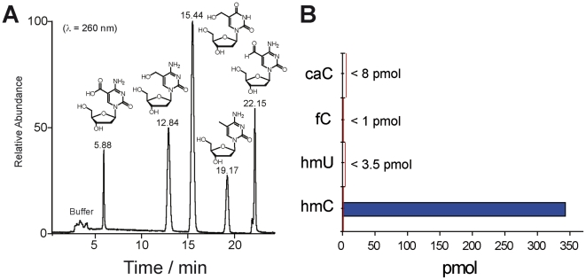 Detection of potential demethylation intermediates caC, hmU, and fC. A) HPLC-chromatogram of the synthesized cytosine and uracil modifications caC, hmC, hmU, mC, and fC as 2′-deoxynucleosides showing excellent separation of the compounds. B) Detected values of the potential intermediates as example in olfactory bulb. The red line indicates the detection limits of the modified nucleosides in enzymatically digested DNA samples.