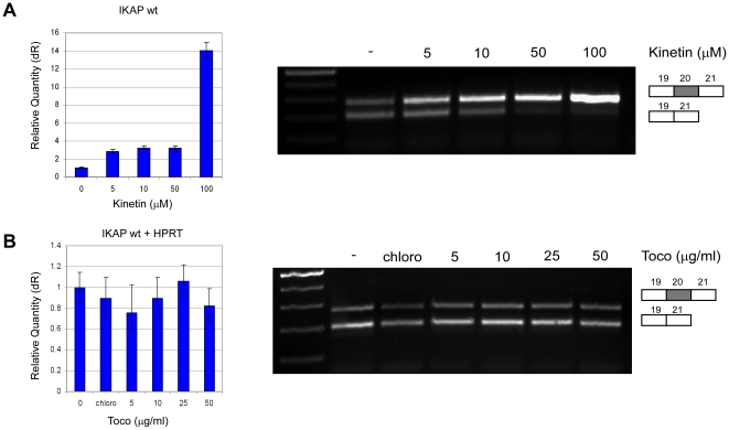 The effect of substances already tested in FD models or patients on IKAP mRNA levels. ( A ) Kinetin or ( B ) tocotrienol (Toco) were added to FDB cells at the indicated concentrations. RNA was extracted 24 hr following the addition of the substance. Left side: QPCR analysis of the level of exon 20 inclusion isoform (wt). Data were normalized to that of untreated control cells. Right side: RT-PCR analysis of the splicing of the endogenous IKAP . All splicing products were separated on a 2% agarose gel after RT-PCR reaction using primers to exons 19 and 21. The PCR products were eluted and sequenced. All experiments were repeated independently three times, and the results shown are representative of an average experiment. QPCR experiments were amplified in triplicate; results shown are mean values ± SD.