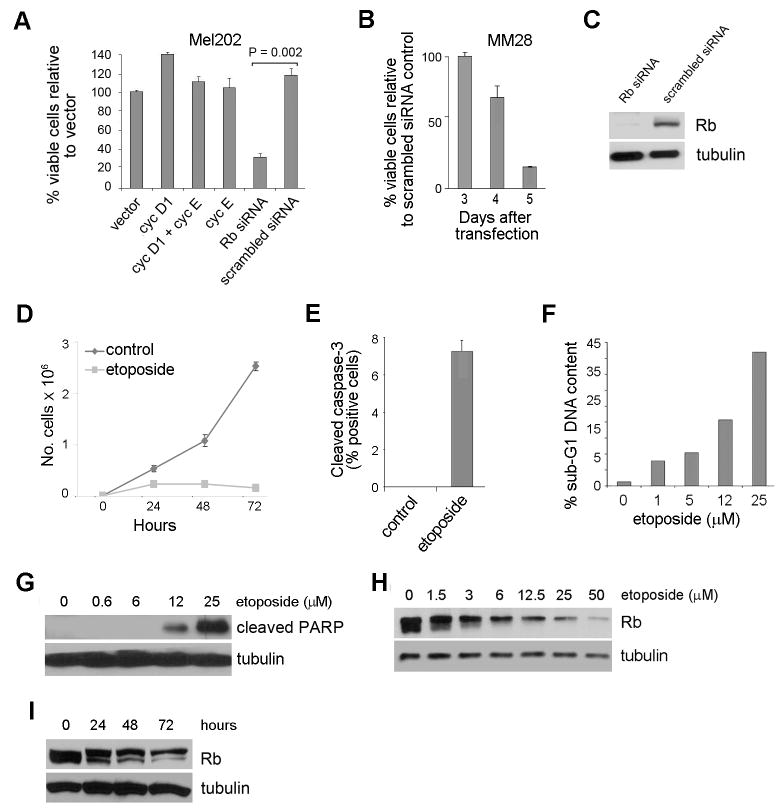 Loss of Rb leads to apoptosis. ( A ) Mel202 cells were transfected with scrambled siRNA or Rb siRNA, or with vectors expressing cyclin D1 and/or cyclin E to activate endogenous Cdks for 4 days and cell viability assays were performed. ( B ) Cell viability assays were performed in MM28 primary melanoma cells using scrambled siRNA or Rb siRNA. ( C ) Immunoblot analysis confirming effective knock down of Rb with siRNA in Mel202s after 4 days. Tubulin was used as a loading control in all immunoblot experiments. ( D ) 12.5 μM of etoposide treatment halted cell growth in Mel202 cells as shown by growth curves. ( E ) Cleaved caspase 3 staining of Mel202 cells treated with or without 12.5 μM of etoposide for 48 h. ( F ) Flow cytometry was performed using Mel202 cells treated with 0, 1, 5, 12, 25 μM etoposide for 48 h. ( G ) Mel202 cells were treated with 0, 0.6, 6, 12, 25 μM etoposide for 48 h and immunoblotted for cleaved PARP. ( H ) Mel202 cells were treated with 0, 1.5, 3, 6, 12.5, 25, 50 μM etoposide for 48 h and immunoblotted for Rb. ( I ) Mel202 cells were treated with 12.5 μM etoposide for 0, 24, 48, 72 h and immunoblotted for Rb.