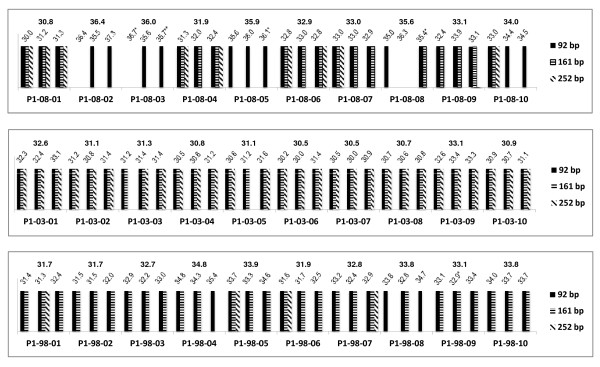 Comparison of the multiplex endpoint RT-PCR and RT-qPCR assays for protocol 1 (P1) . The bottom axis identifies the samples. The band sizes obtained for each of the sample replicate are shown as bars. The values on the top of the graph provide both the C q value measured for each sample replicate in the TBP RT-qPCR assay and the mean C q value. Symbols are as follows: * indicates a standard deviation between replicates that is greater than 0.5; ** one out of two replicates amplified.