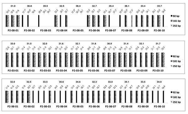 Comparison of the multiplex endpoint RT-PCR and RT-qPCR assays for protocol 2 (P2) . The bottom axis identifies the samples. The band sizes obtained for each of the sample replicate are shown as bars. The values on the top of the graph provide both the C q value measured for each sample replicate in the TBP RT-qPCR assay and the mean C q value. Samples labelled with a * symbol indicate a standard deviation between replicates that is greater than 0.5.