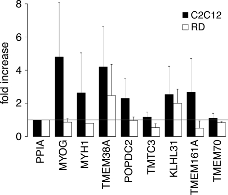NE composition changes during muscle differentiation. Expression levels of several muscle NETs were tested in both C2C12 (mouse) and RD (human) myoblast to myotube differentiation systems. RNA extracted from both untreated myoblast and chemically differentiated myotube populations were subjected to RT-PCR for each NET, and expression levels were quantified. The relative change between myoblast and myotube populations was determined after first normalizing values to the control peptidylprolyl isomerase A ( PPIA ). Relative transcript levels for both human and mouse systems are shown, and error bars indicate standard deviations between three replicates for each differentiation system. Four NETs were induced similarly to positive differentiation controls, MYOG and MYH1 .
