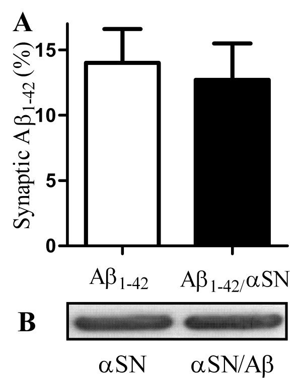 αSN did not affect the accumulation of Aβ 1-42 in synapses . (A) The amount of biotinylated-Aβ 1-42 found in synaptosomes derived from cortical neurons incubated for 1 hour with 100 nM Aβ 1-42 (□) or 100 nM Aβ 1-42 that had been pre-mixed with 500 nM αSN (■). Values shown are the mean amount of Aβ 1-42 expressed as a % of the amount added ± SD, n = 12. (B) Immunoblot showing the amount of αSN in synaptosomes collected from cortical neurons incubated with 200 nM αSN alone or with 200 nM αSN pre-mixed with Aβ 1-42 (50:1).
