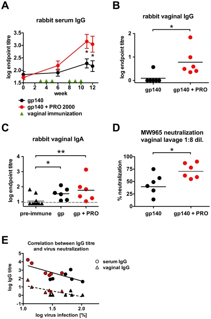 PRO 2000 co-application induces increased systemic and mucosal antibody responses in rabbits. New Zealand White rabbits (n = 6) received six vaginal immunizations using 50 mg antigen per dose in the presence or absence of 1% PRO 2000. ( A ) Time course of rabbit serum IgG endpoint titres. ( B ) Endpoint IgG titres of week 12 vaginal lavage samples. ( C ) Endpoint IgA titres of week 12 vaginal lavage samples. ( D ) MW965 pseudovirus neutralization of week 12 vaginal lavage samples. Horizontal bars represent geometric means. Samples were tested at 1∶8 dilution; 100% infection level was defined by pre-immune samples. ( E ) Correlation of the rabbit serum- and vaginal gp140-specific IgG responses with the MW965 pseudovirus neutralization ( D ) of week 12 samples. Red symbols represent data from animals immunized with gp140 + PRO 2000. Pre-immune indicates samples collected prior to the first immunization; gp140 + PRO indicates combined gp140 and PRO 2000. Titre data were log-transformed and are shown as mean ± SEM. The grey dashed line indicates the ELISA detection limit. * p