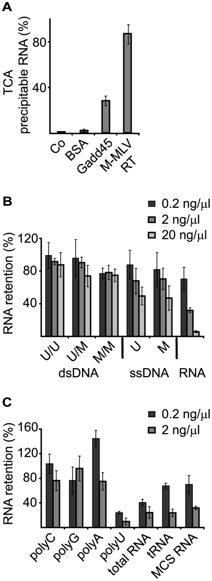 <t>Gadd45a</t> binds RNA in vitro . A, RNA filter binding assay using the indicated proteins and 32 P-labeled RNA (multiple cloning site transcript, MCS). Co, no protein; BSA, bovine serum albumin; <t>M-MLV</t> RT - Moloney murine leukemia virus reverse transcriptase. B, C, RNA filter binding assays using 32 P-labeled MCS RNA were performed with recombinant Gadd45a in the presence of the indicated unlabeled competitor nucleic acids. Data are shown as percentage of 32 P bound in the absence of the competitor. Each sample was done in triplicate; average and standard deviation was generated; A representative experiment out of three is shown. U, unmethylated; M, methylated; U/U, unmethylated; U/M, hemimethylated; M/M, holomethylated; PolyA, polyC, polyG, polyU, homopolyribonucleotides; total RNA, RNA isolated from HEK293T cells; tRNA, yeast tRNA; MCS RNA, multiple cloning site RNA. Error bars, s.e.m. (n = 3). A representative experiment out of three is shown.