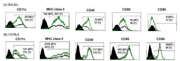 Immunophenotype of primary DCs derived from (A) BALB/c and (B) C57BL6 mice, does not change after nonviral genetic transfection . The 2dDC were transfected with pVR1012-Ag2/PRA plasmid DNA. After 24 h of transfection, the cells were stained with fluorochrome-conjugated antibodies specific to MHC class II, CD11c, CD40, CD80, CD86 cell-surface antigens. The cell debris was gated-out and histogram charts were plotted. The filled histogram charts are of cells stained with isotype-control antibody. The mean fluorescent intensity (MFI) values were determined for the cells under the bar (⊓) region. The values within the charts indicate the MFI values for the nontransfected (NT, black line) and transfected (T, green line) cells stained with antibodies specific to cell-surface antigens. The results are from one representative experiment conducted thrice.