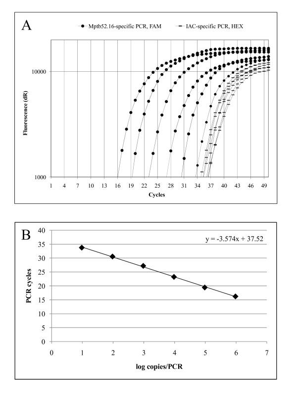 Amplification plot (A) and standard curve (B) of the optimized real-time PCR assay for the Mptb52.16 target . Based on the molecular weight of the genome of MAP strain K-10 (GenBank accession number AE016958 ), 1 ng DNA equals 9.59 × 10 5 copies of the entire genome. The MAP-specific target Mptb52.16 is a single-copy gene. Thus, this figure equals the number of PCR targets per ng. The dilution series ranged from 9.59 × 10 5 to 9.59 × 10 0 copies of the genomic DNA from MAP strain CIP 103974 per PCR. Fifty copies of an IAC were added to each reaction. The MAP-specific probe was detected in the FAM channel, whereas the IAC-specific probe was detected in the HEX channel.