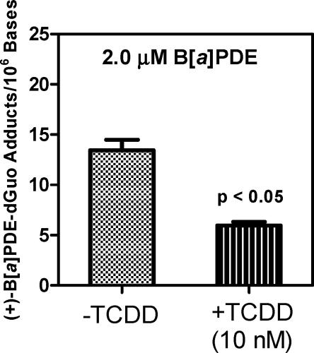 Measurement of (+)-B[ a ]PDE-dGuo H358 cells treated with 2 μM (±)-B[ a ]PDE with and without 10 nM TCDD pretreatment. (+)-B[ a ]PDE-dGuo formation with TCDD-induced cells was decreased compared with that of the noninduced cells.