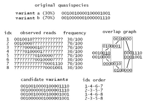 Overlap graph . Example of amplicon sampling from a quasispecies constituted by two variants (binary alphabet), with different prevalence. The reads are aligned to a reference genome, cover entirely an amplicon and are trimmed to the amplicon start/end positions (otherwise a question mark is placed). With such a design of 4 amplicons and 3 overlaps, the last overlap allows for ambiguous consistency. The overlap graph analysis leads to the reconstruction of 4 candidate variants, where 2 of them are in-silico recombinants. Without additional analysis on read distributions over the amplicons, it is impossible to infer the correct quasispecies.