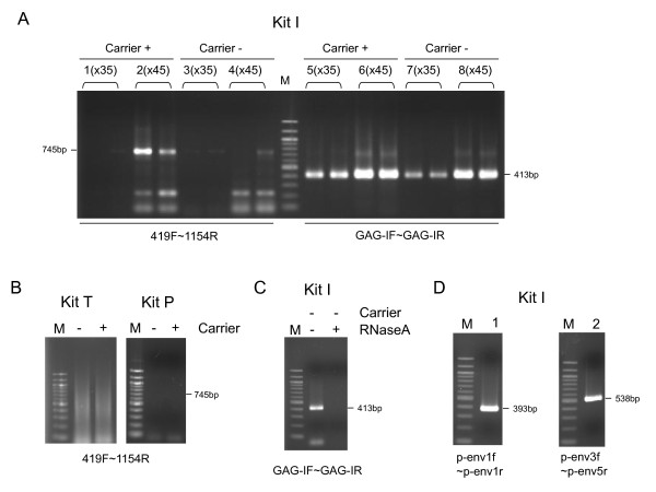 Amplification of MLV-like viral sequences in Kit I . (A) One-step RT-PCR was conducted using Kit I with the indicated primer sets. The RT-PCR conditions were as follows: reverse transcription at 55°C for 30 minutes; activation at 94°C for 2 minutes; 35 (lanes 1, 3, 5 and 7) or 45 cycles (lanes 2, 4, 6 and 8) of the following steps: 94°C for 15 s, 57°C for 30 s, and 68°C for 1 minute; and a final extension at 68°C for 3 minutes. Lanes 1, 2, 5 and 6: one-step RT-PCR with carrier RNA; Lanes 3, 4, 7 and 8: one-step RT-PCR without carrier RNA. Each reaction was carried out in duplicate. (B) One-step RT-PCR was conducted using Kit T (left panel) and Kit P (right panel) with primers 419F and 1154R with or without carrier RNA. The RT-PCR conditions using Kit T were as follows: reverse transcription at 50°C for 30 minutes; activation at 94°C for 2 minutes; 45 cycles of the following steps: 94°C for 30 s, 57°C for 30 s, and 72°C for 1 minute; and a final extension at 72°C for 10 minutes. The RT-PCR conditions using Kit P were as follows: reverse transcription at 45°C for 45 minutes; activation at 95°C for 2 minutes; 45 cycles of the following steps: 95°C for 30 s, 57°C for 30 s, and 70°C for 45 s; and a final extension at 70°C for 5 minutes. (C) One-step RT-PCR was conducted with primers GAG-I-F and GAG-I-R using Kit I with or without RNaseA. Carrier RNA was not added to the reaction mixtures. The RT-PCR conditions were as follows: reverse transcription at 55°C for 30 minutes; activation at 94°C for 2 minutes; 45 cycles of the following steps: 94°C for 15 s, 57°C for 30 s, and 68°C for 1 minute; and a final extension at 68°C for 3 minutes. (D) One-step RT-PCR was conducted using Kit I to amplify env region of the contaminants. One-step RT-PCR was carried out using two primer sets p-env1f and p-env1r (lane 1), and p-env3f and p-env5r (lane 2). The RT-PCR conditions were the same as in Figure 1C with the exception of the number of PCR cycles (60 cycles instead of 45 cycles). M: DNA size marker.