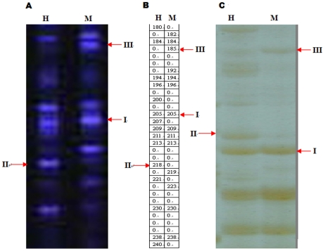 Cytosine methylation patterns with the primer combination H-M+TAA/E+AGT. (A) The profile from F-MSAP; (B) The data from (A) quantitated using GeneScan Analysis software; (C) The profile from MSAP using silver stain; H and M refer to digestion with EcoRI/HpaII and EcoRI/MspI, II and III refer to unmethylated, hemi-methylated and fully methylated sites, respectively.