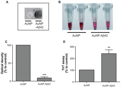 Confirmation of Aβ42 conjugation to AuNP and induction of AuNP–Aβ42 precipitates by Aβ42 aggregation. A ) Verification of biotin–Aβ42 conjugation to streptavidin-AuNP by dot blot analysis. B ) After 48 hours incubation, visible AuNP–Aβ42 precipitates formed in the bottom of the tubes and the supernatant became clear; no precipitate was observed in the AuNP control. C ) Optical density of supernatant as a quantitative indicator of AuNP–Aβ42 precipitation (Paired t -test, *** P