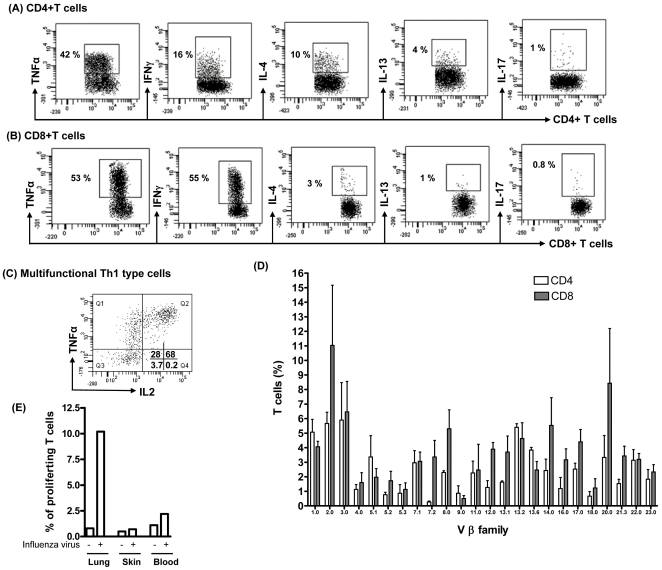 Large numbers of immunocompetent and influenza-specific T cells resides in human lung. Lung T cells were extracted by lung explant method. (A–B) The cytokine secretion of effector memory T cells after overnight stimulation with artificial APCs (microbeads coated with anti-CD2, anti CD3 and antiCD28 mAbs) at 1∶1 cells: bead ratio. Brefeldin A (golgi-stop) was added 6 h prior to intracellular staining of cytokines. A representative dot plot of each cytokine is shown and 6 additional experiments produced similar results. (C) CD4+T cells were stained with TNFα, IL-2 and IFNγ after stimulation with PMA+ionomycin for 6h in presence of brefeldin A (Gate on CD4+IFNγ+ population). A representative dot plot is shown and 10 additional experiments produced similar results. (D) Lung T cells were isolated and stained for different Vbeta T cell receptors using TCR V beta repertoir kit (Beckman coulter) according to manufacturer's instructions. Diversity of V beta TCRs was analyzed by flow cytometry. Data represent Mean +/− SEM of 3 different donors. (E) CFSE labeled T cells from lung, skin and blood were cultured with heat killed influenza virus pulsed APCs in 1∶2 ratio. On day 4, T cell proliferation was measured by analyzing CFSE dilution using flow cytometry. A representative experiment is shown and 2 additional experiments produced similar results.