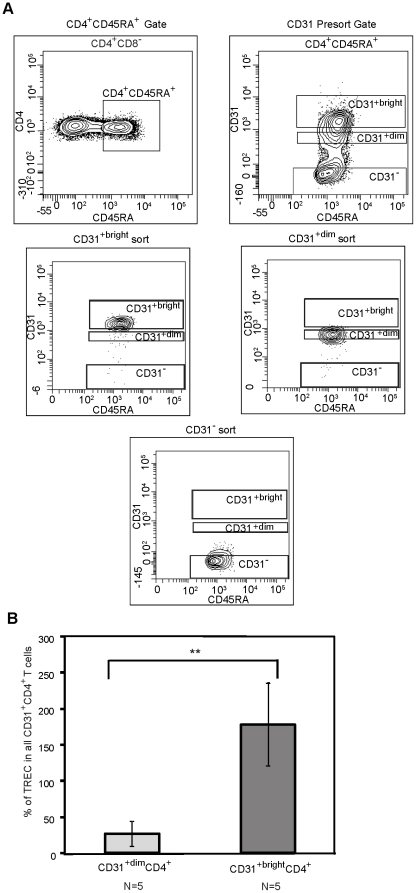 TREC content correlates with levels of CD31 expression on CD31 + CD4 + naive T-cells. Fresh PBMC from five HIV-1 seronegative individuals, ranging from 25-56 years of age, were sorted into total CD31 + CD4 + , CD31 +bright CD4 + and CD31 +dim CD4 + naïve T-cell subsets. A.) Pre-sort gates for determining the CD31 +bright CD4 + , CD31 +dim CD4 + , and CD31 - CD4 + naïve T-cell subsets are shown. The bottom three plots depict representative post-sort analysis of the subsets. B.) Genomic DNA was extracted from each subset and subjected to quantitative Real-Time PCR to quantify TREC content. The data is expressed as a percentage of TREC number in the indicated subset shown relative to TREC number in total CD31 + CD4 + naïve T-cells. The asterisks signify the following value, ** p = 0.009.