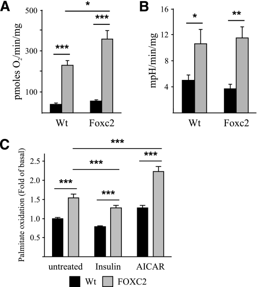 Cells overexpressing Foxc2 have increased aerobic capacity and enhanced levels of palmitate oxidation. A : Oxygen consumption rates in MEF-derived adipocytes from WT and Foxc2 overexpressing mice. Basal rates were determined in the absence of uncoupler (black bars), whereas maximal rates were determined after the addition of uncoupler (1 μmol/L FCCP; gray bars; n = 4 multiwell plates/genotype). * P = 0.05; *** P = 0.001. B : Extracellular acidification rates, a surrogate measure of glycolytic activity (see research design and methods ), in MEF-derived adipocytes from WT and Foxc2 overexpressing mice. Basal rates were determined in the absence of uncoupler (black bars), whereas maximal rates were determined after the addition of uncoupler (1 μmol/L FCCP; gray bars; n = 4 multiwell plates/genotype). * P = 0.05; ** P = 0.01. C : Palmitate oxidation was measured in MEF-derived adipocytes from WT (black bars) and FOXC2 overexpressing (gray bars) mice under basal conditions and in the presence of 100 nmol/L insulin (inhibitor of fatty acid oxidation) or 1 mmol/L AICAR (activator of AMP-activated protein kinase [AMPK]). Values are calculated as fold differences compared with palmitate oxidation under basal conditions in MEF-derived adipocytes from WT mice ( n = six multiwell plates/genotype). ** P = 0.01; *** P = 0.001. As expected, insulin decreased, whereas AICAR stimulated fatty acid oxidation in a similar manner both in the adipocytes derived from WT and FOXC2 overexpressing mice. Oxidation of palmitate was higher in adipocytes with increased expression of FOXC2 compared with the WT adipocytes under basal conditions and after treatment with insulin and AMPK activator AICAR.