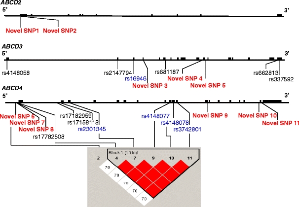 Identified single nucleotide polymorphisms (SNPs) of ABCD2 , ABCD3 , and ABCD4 ( upper panel ). Comprehensive resequencing of ABCD2 , ABCD3 , and ABCD4 genes of the 40 patients with adrenoleukodystrophy (ALD) revealed two novel SNPs, nine SNPs (six known and three novel SNPs), and 13 SNPs (seven known and six novel SNPs), respectively. Red characters indicate the novel SNPs, blue characters indicate the SNPs identified in the coding region, and black characters indicate the SNPs identified in the noncoding region. Linkage disequilibrium (LD) map of SNPs of ABCD4 in Japanese patients with ALD and the controls using the Haploview version 4.1 ( lower panel ). The five known SNPs (rs17782508, rs2301345, rs4148077, rs4148078, and rs3742801) were in complete disequilibrium in Japanese patients with ALD and the controls (LOD = 43.97, r 2 = 1.0, D′ = 1.0). Novel SNP7 and the five known SNPs (rs17782508, rs2301345, rs4148077, rs4148078, and rs3742801) were not in strong disequilibrium in Japanese patients with ALD and the controls (LOD = 1.15, r 2 = 0.037, D′ = 0.706), although novel SNP7 and the five known SNPs (rs17782508, rs2301345, rs4148077, rs4148078, and rs3742801) were strong disequilibrium only in Japanese patients with ALD (LOD = 2.02, r 2 = 0.221, D′ = 1.0). The number in the box indicates the data of D′. The color of the box is determined from the LOD score and D′. The block was determined using a confidence interval algorithm [ 33 ]