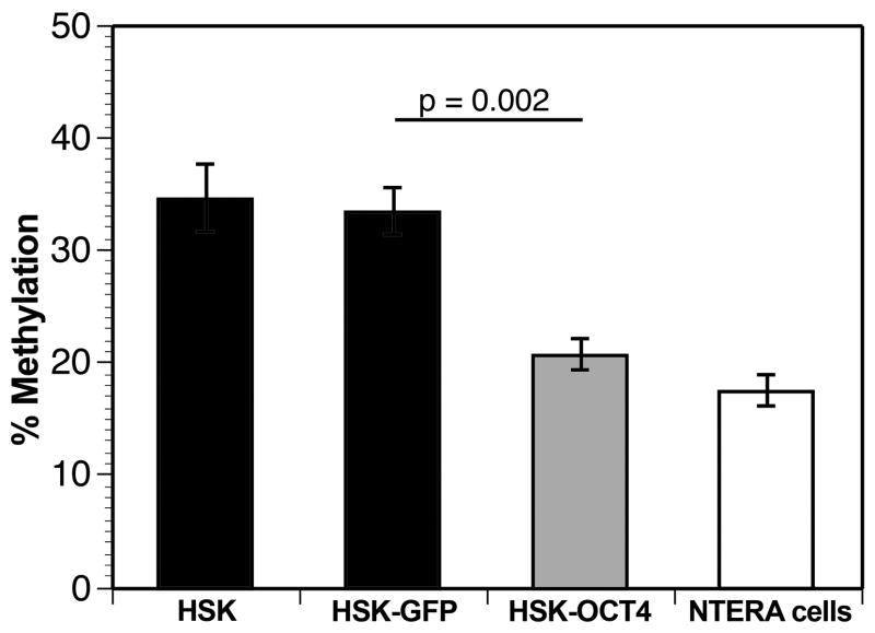 Transient expression of OCT4 produces an overall decrease in global methylation in the transfected human skin keratinocytes (HSK). Shown is a graph depicting percent global methylation in four cellular groups: Untransfected HSKs (HSK); HSKs transiently transfected with pcDNA3-GFP (HSK-GFP) for 48 hours; HSKs transiently transfected with pcDNA3-OCT4-GFP fusion (HSK-OCT4) for 48 hours; and the NTERA-2 positive control cell line that continually expresses OCT4. Note, transfection of OCT4 significantly decreased the global methylation state of HSK (p=0.002) as compared to transfection with GFP alone.